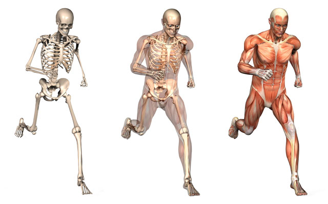 What Is The Human Body The Human Body Is The Whole Of The Human