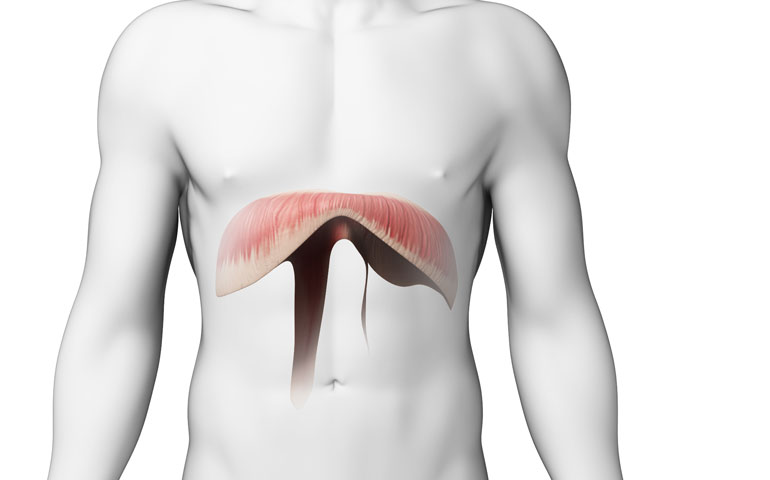 What is the diaphragm? The diaphragm is a dome-shaped sheet of ...