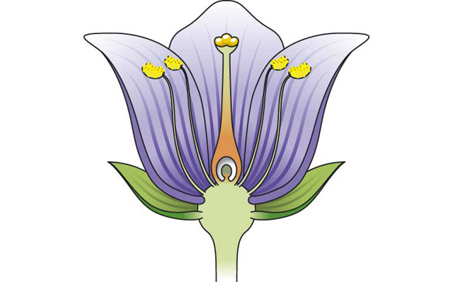 What is a stamen? The stamen is the male part of a flower ...